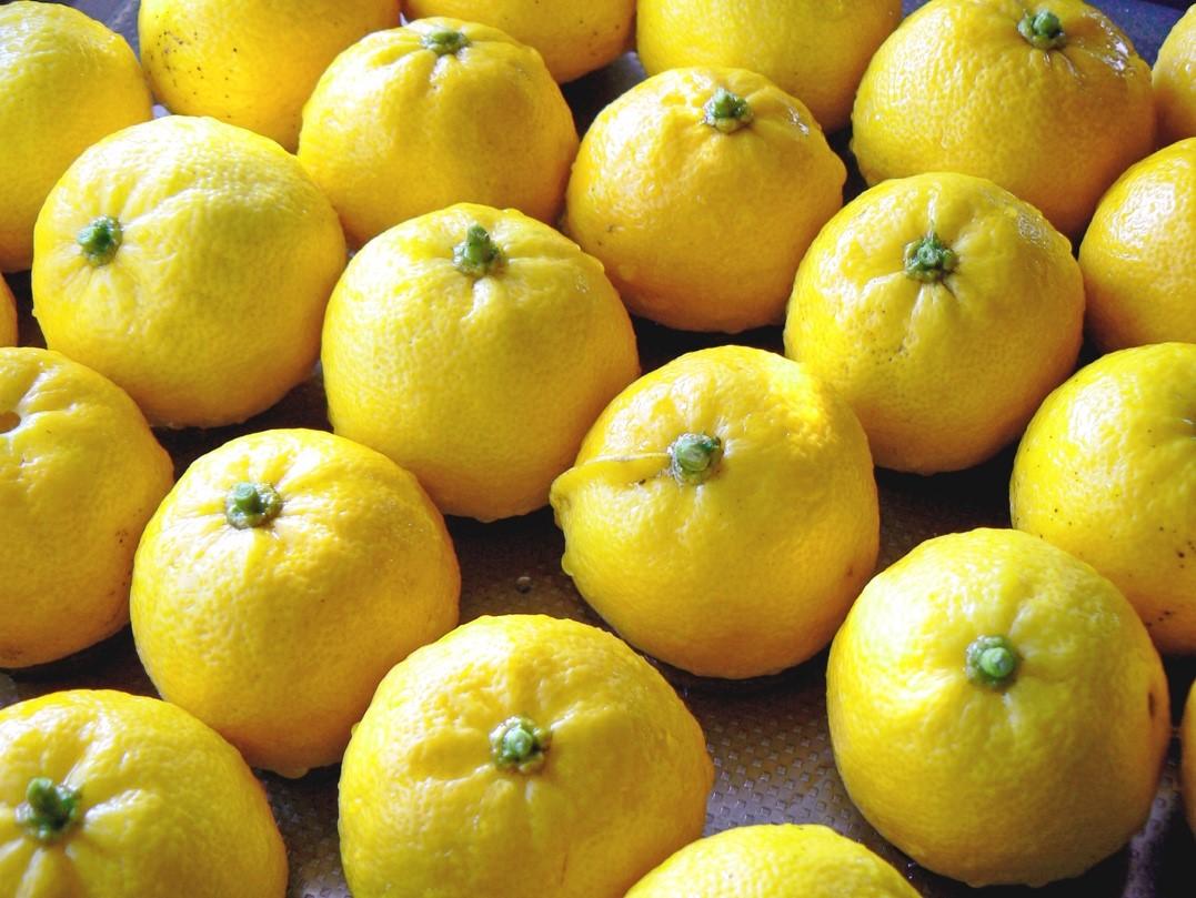 Yuzu froita con cor amarela dourada