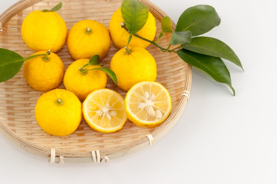 Froitas de Yuzu Yuzu integral e corte
